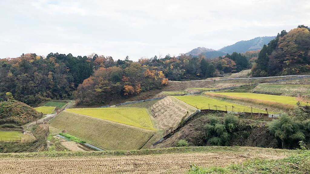 兵庫県養父市の棚田(GLOCOM撮影)